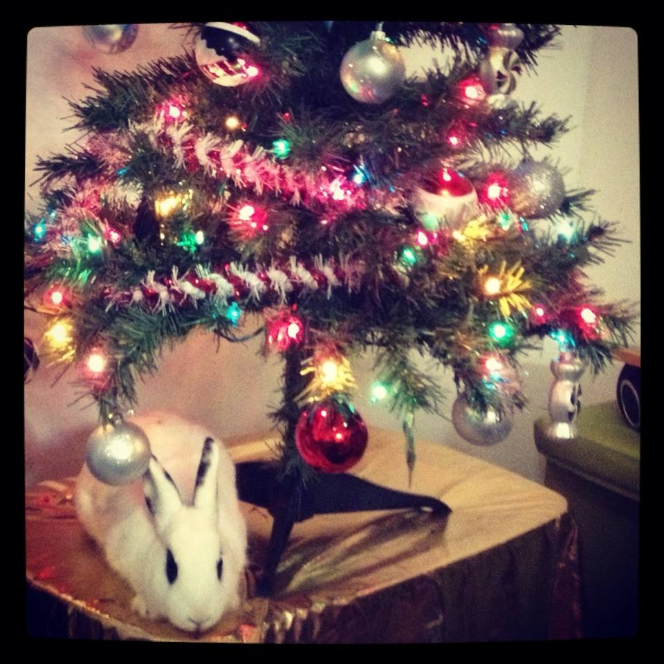 The Daily Bunny's Christmas 2013 Mega-Post 6