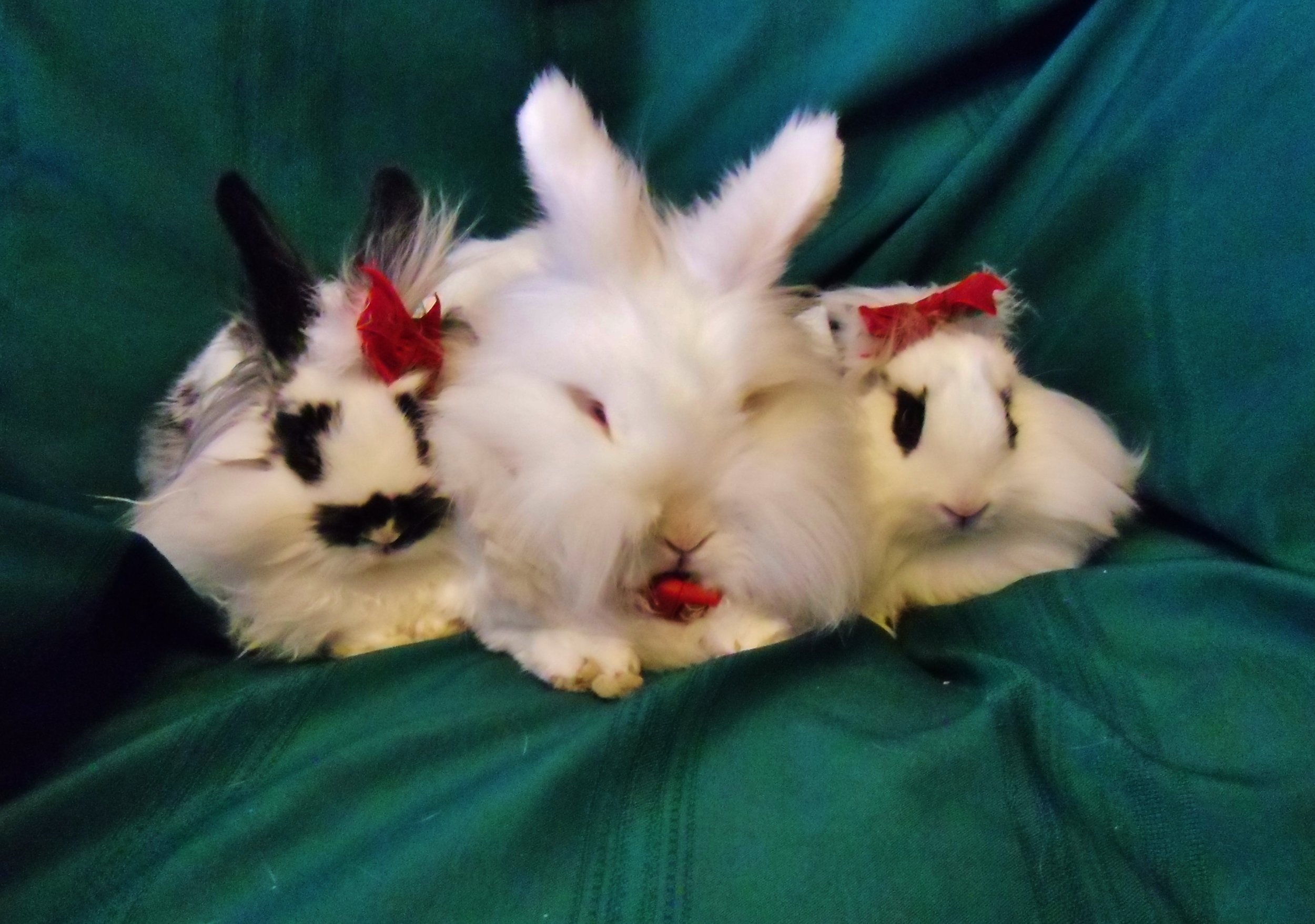 Bunnies Sit Nicely for Holiday Photos 7