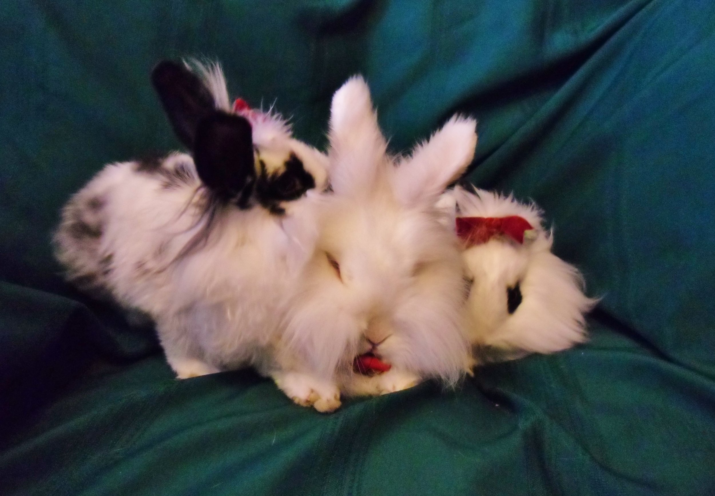 Bunnies Sit Nicely for Holiday Photos 8