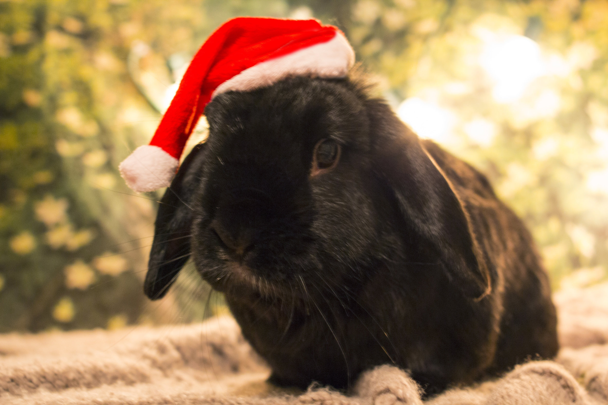 The Daily Bunny's Christmas 2013 Mega-Post 20