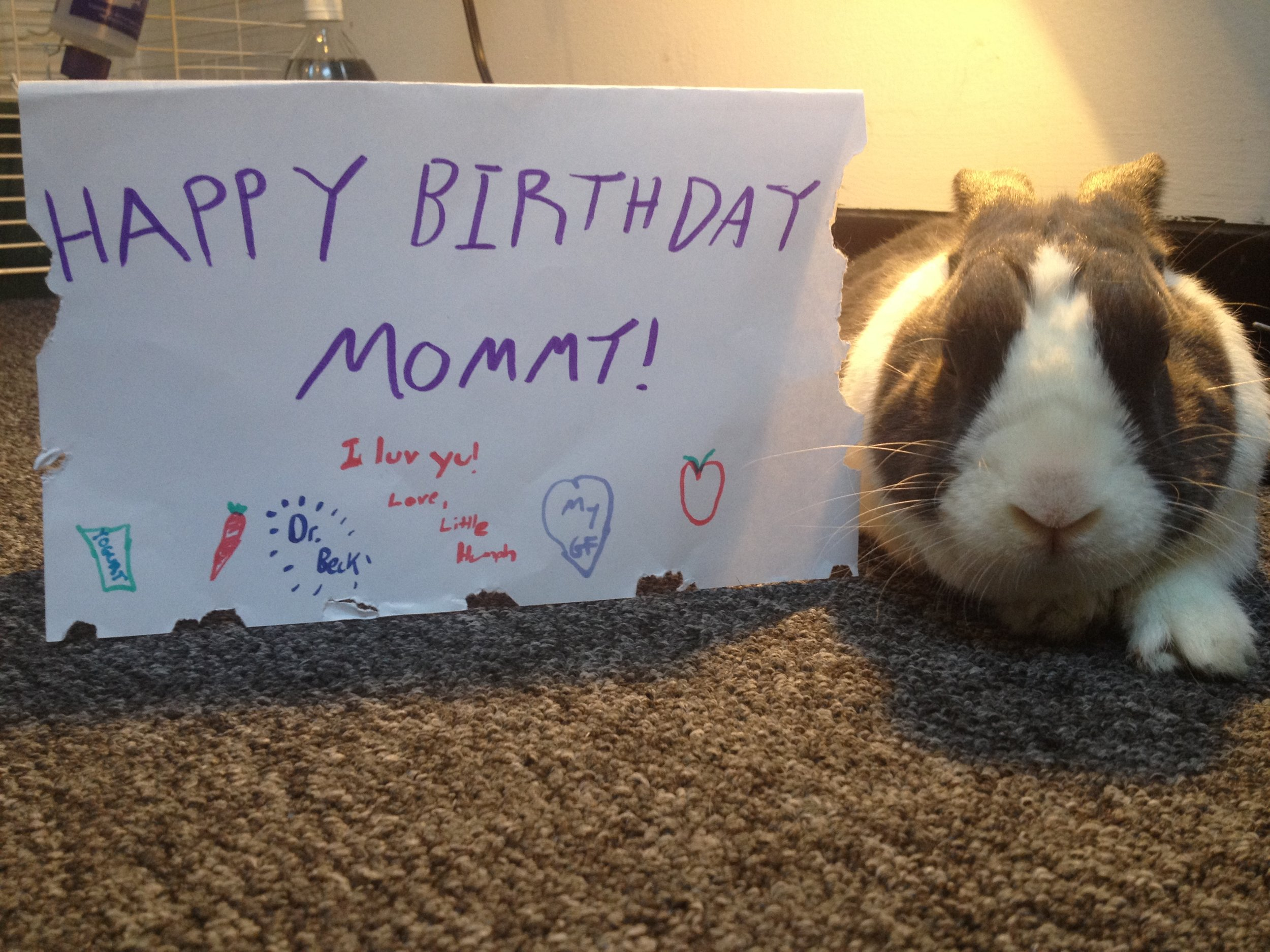 Bunny Wishes His Human a Happy Birthday