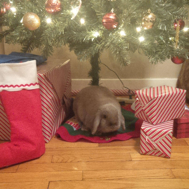 The Daily Bunny's Christmas 2013 Mega-Post 18