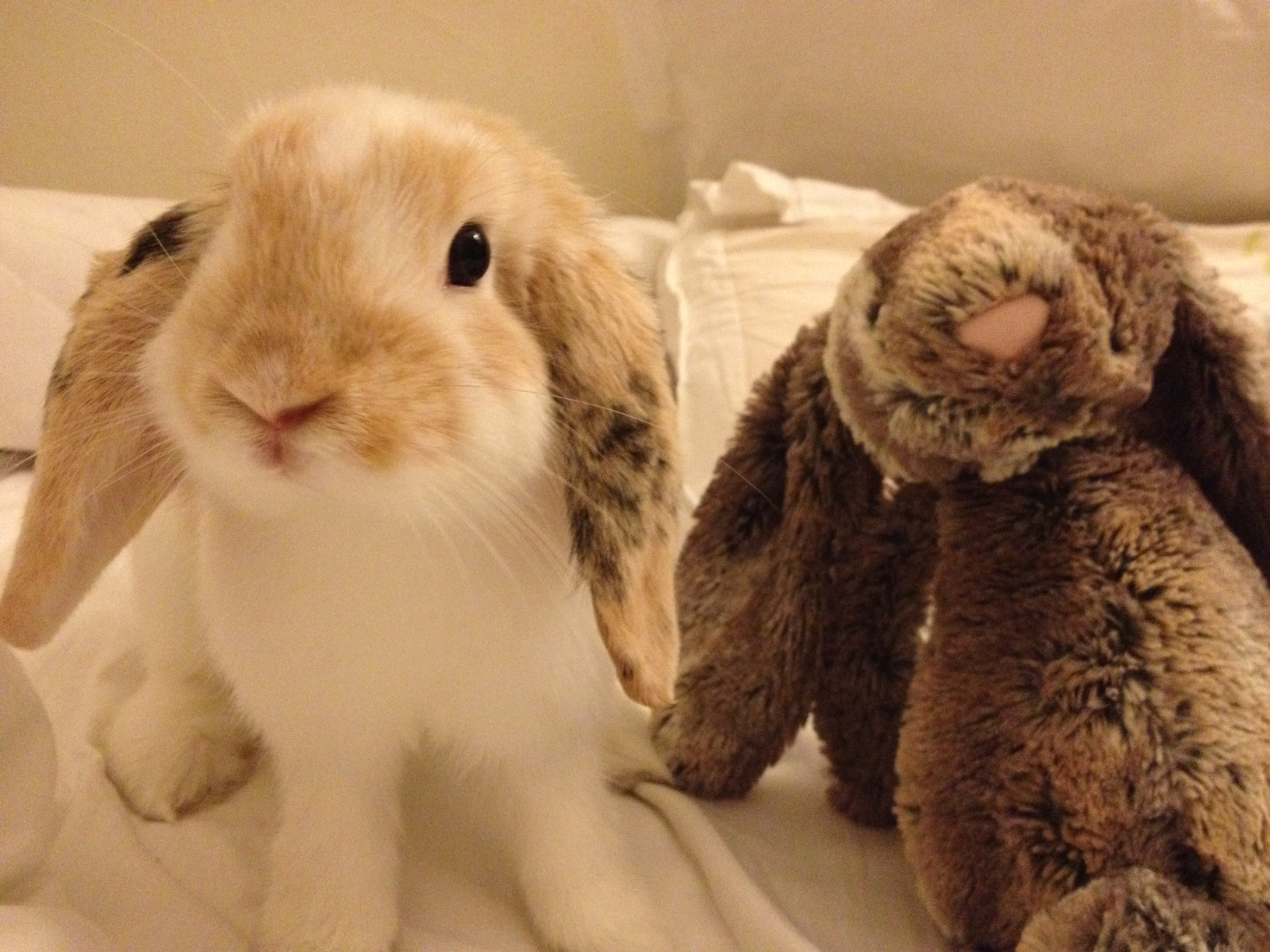 Bunny Hangs Out with Some Plush Friends 1