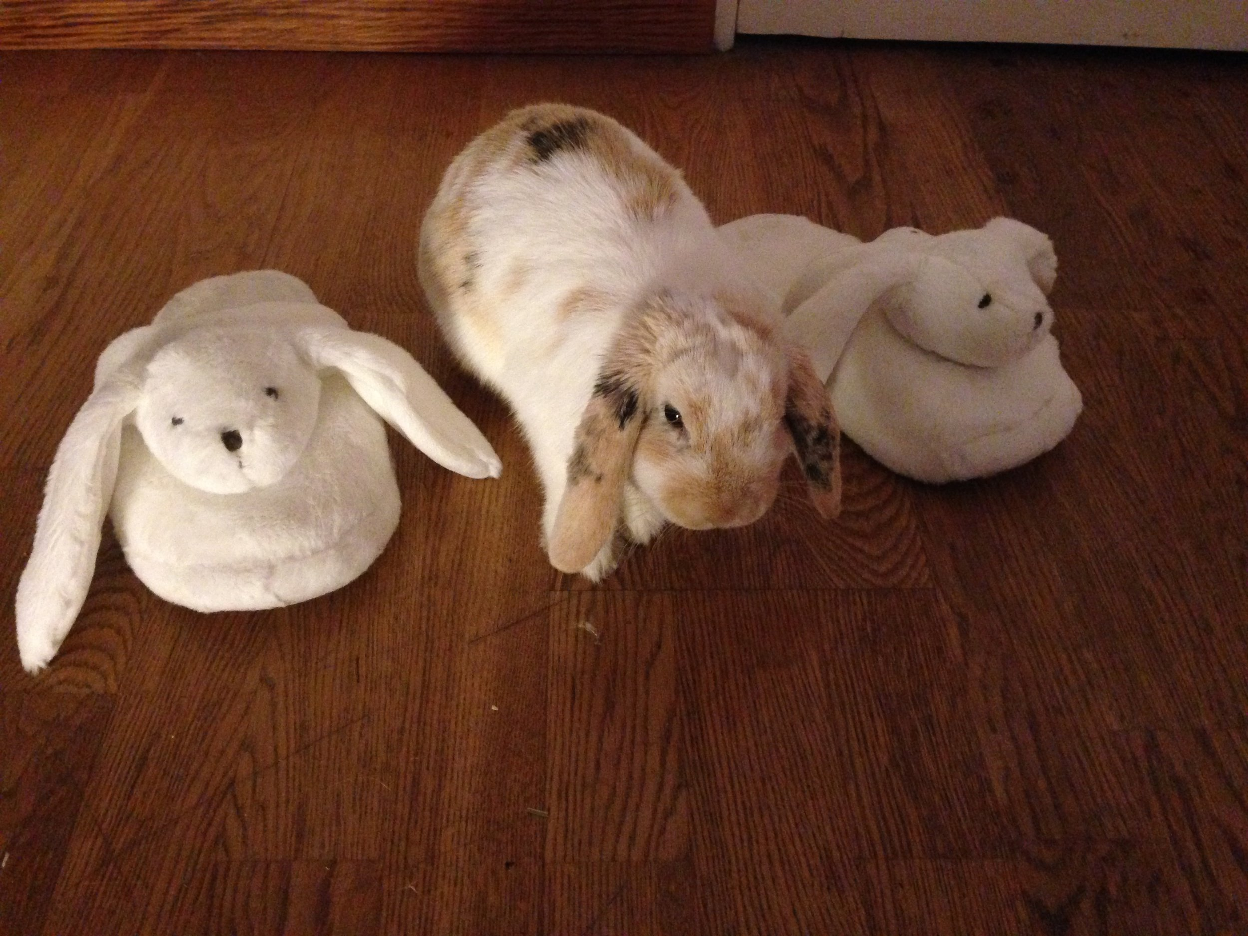 Bunny Hangs Out with Some Plush Friends 2