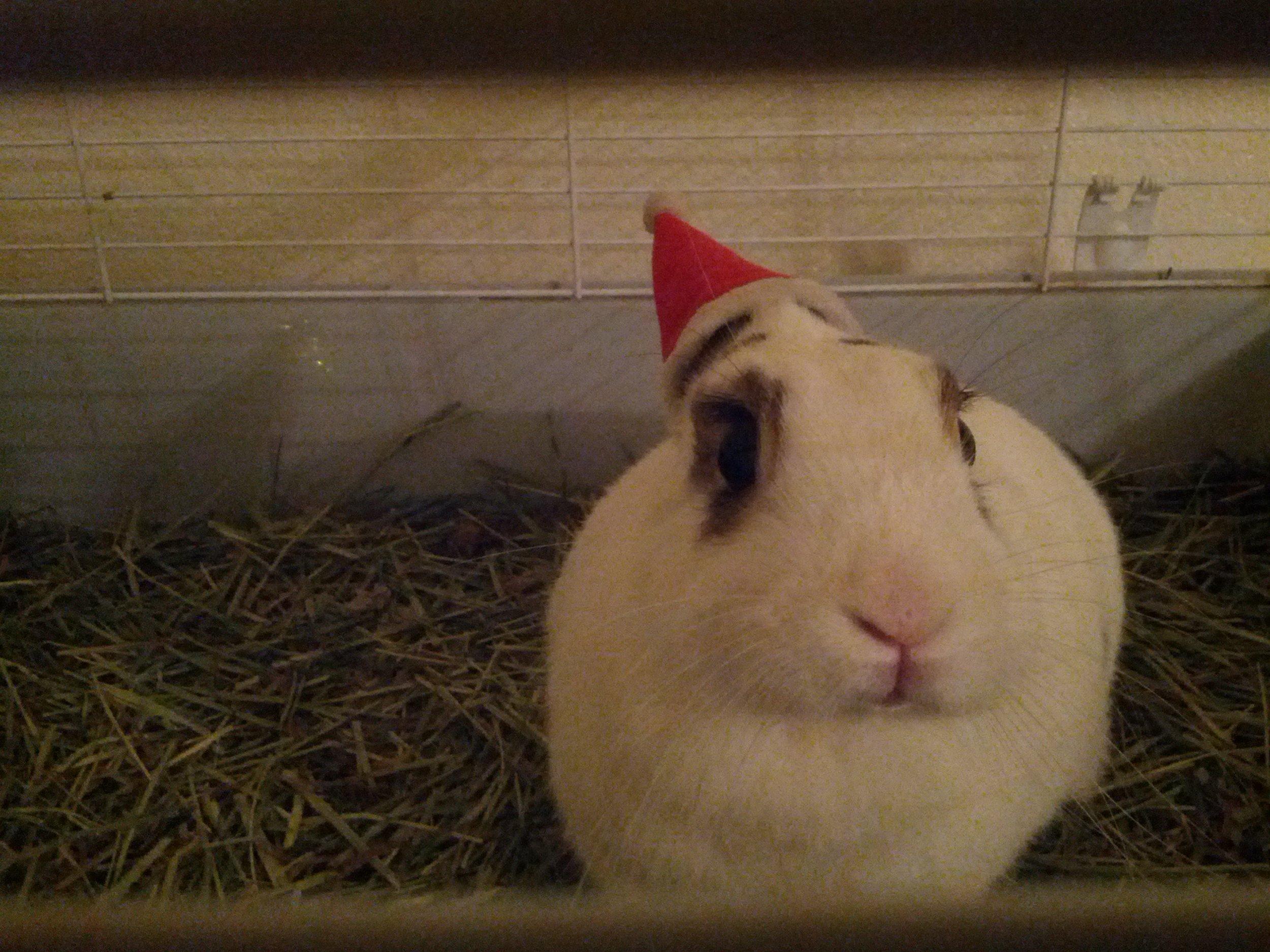 The Daily Bunny's Christmas 2013 Mega-Post 3.2