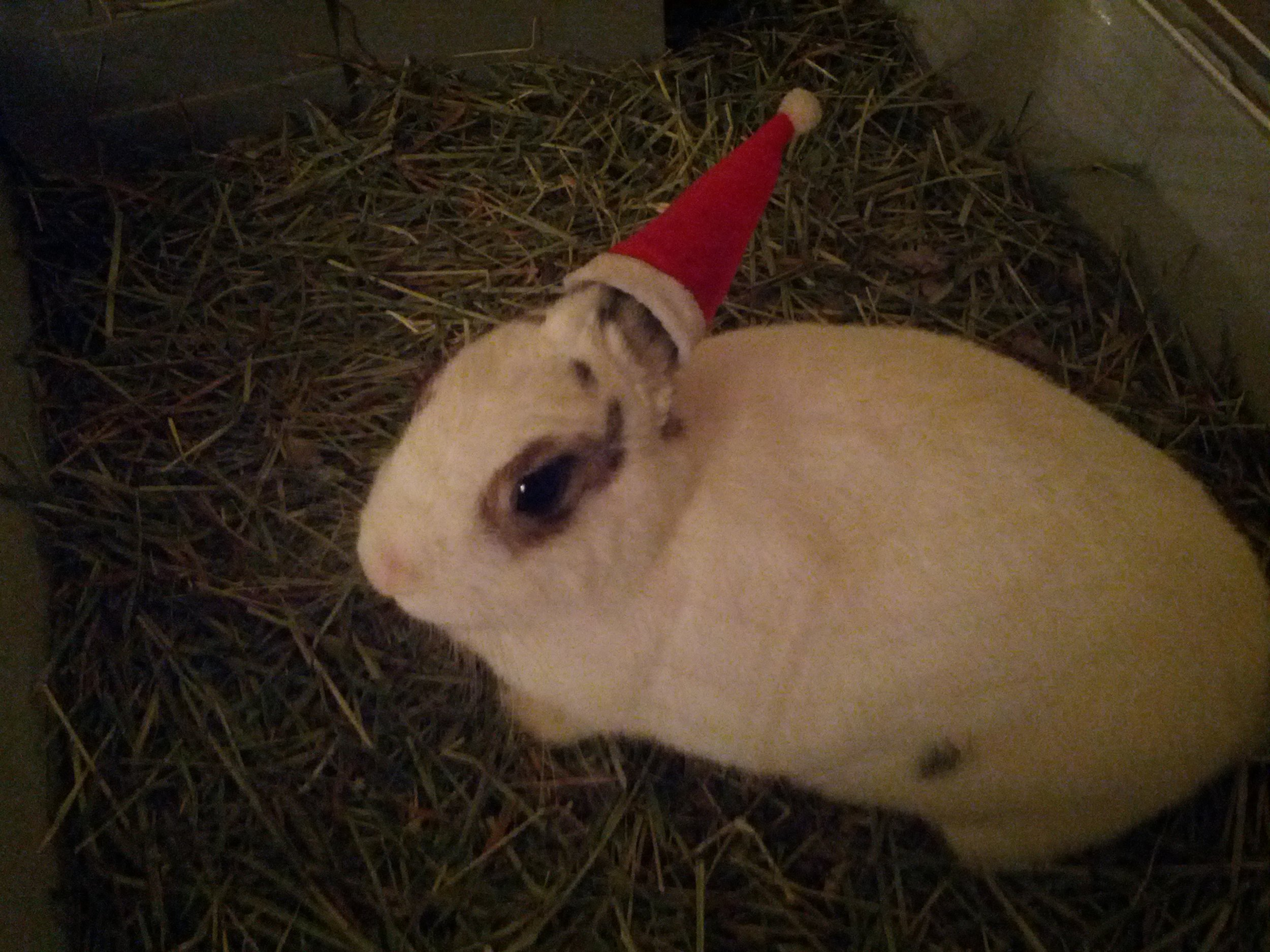 The Daily Bunny's Christmas 2013 Mega-Post 3.1