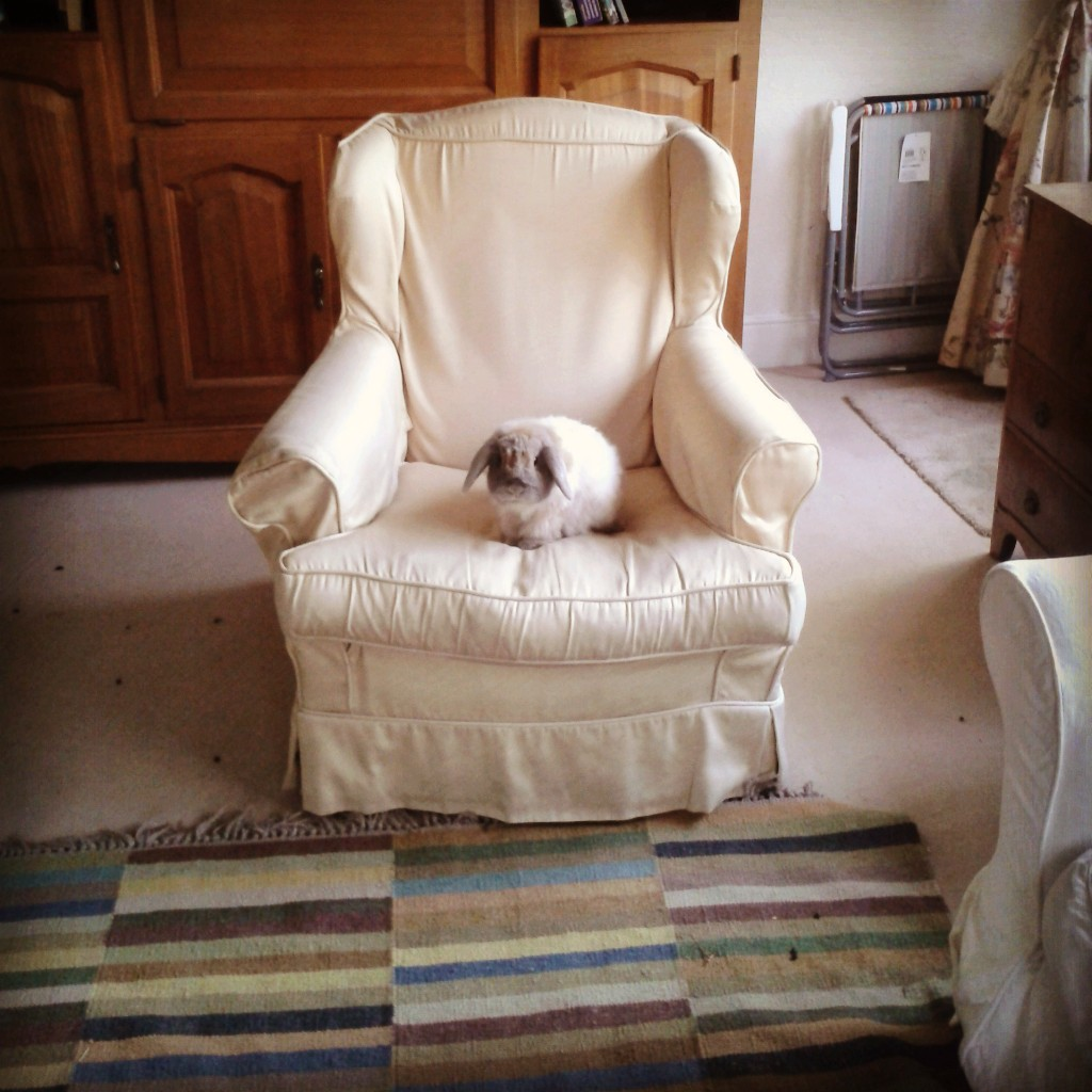 Bunnies Take Turns Sitting in the Big Chair 2