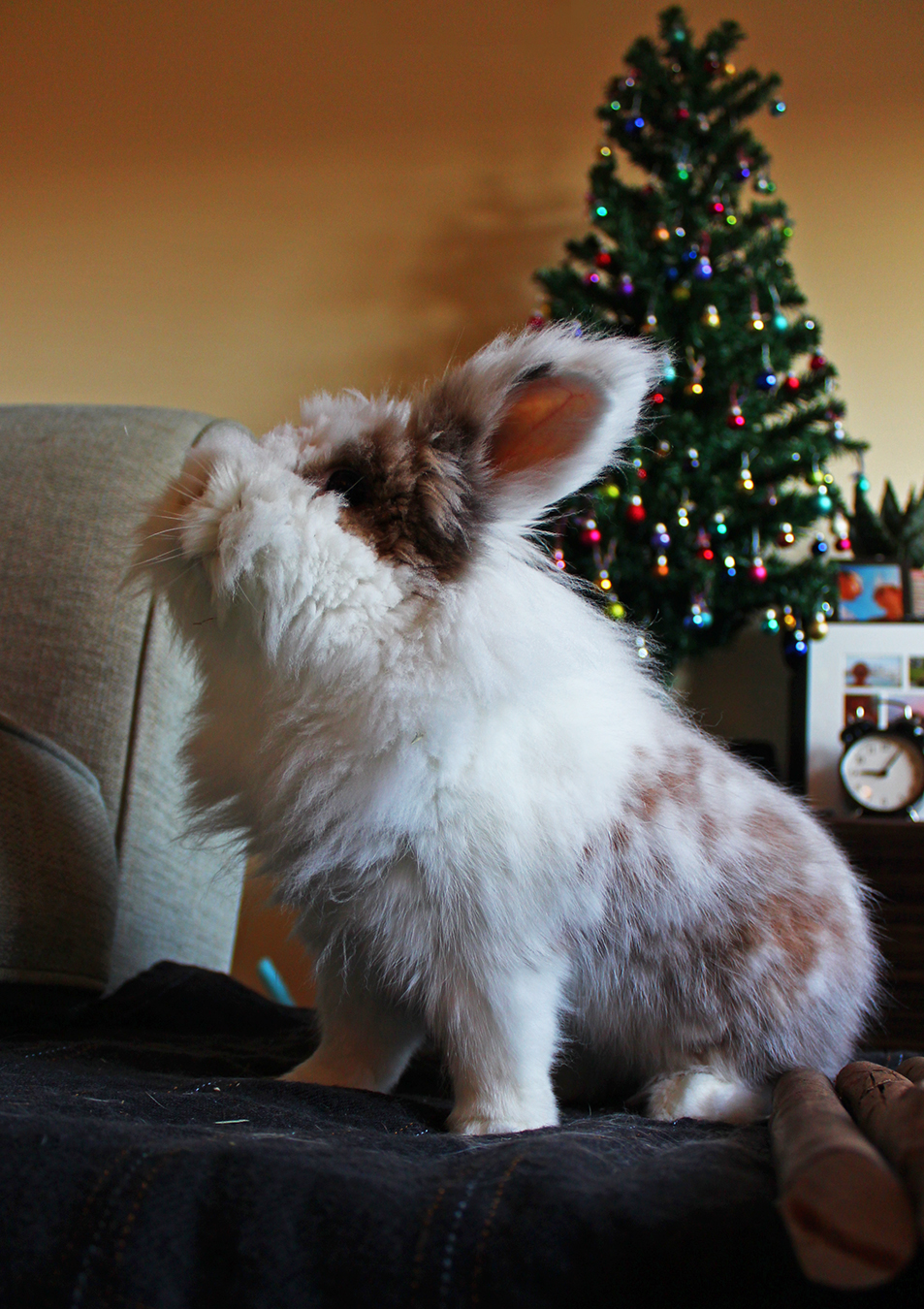 Bunny Wonders Where His Presents Are