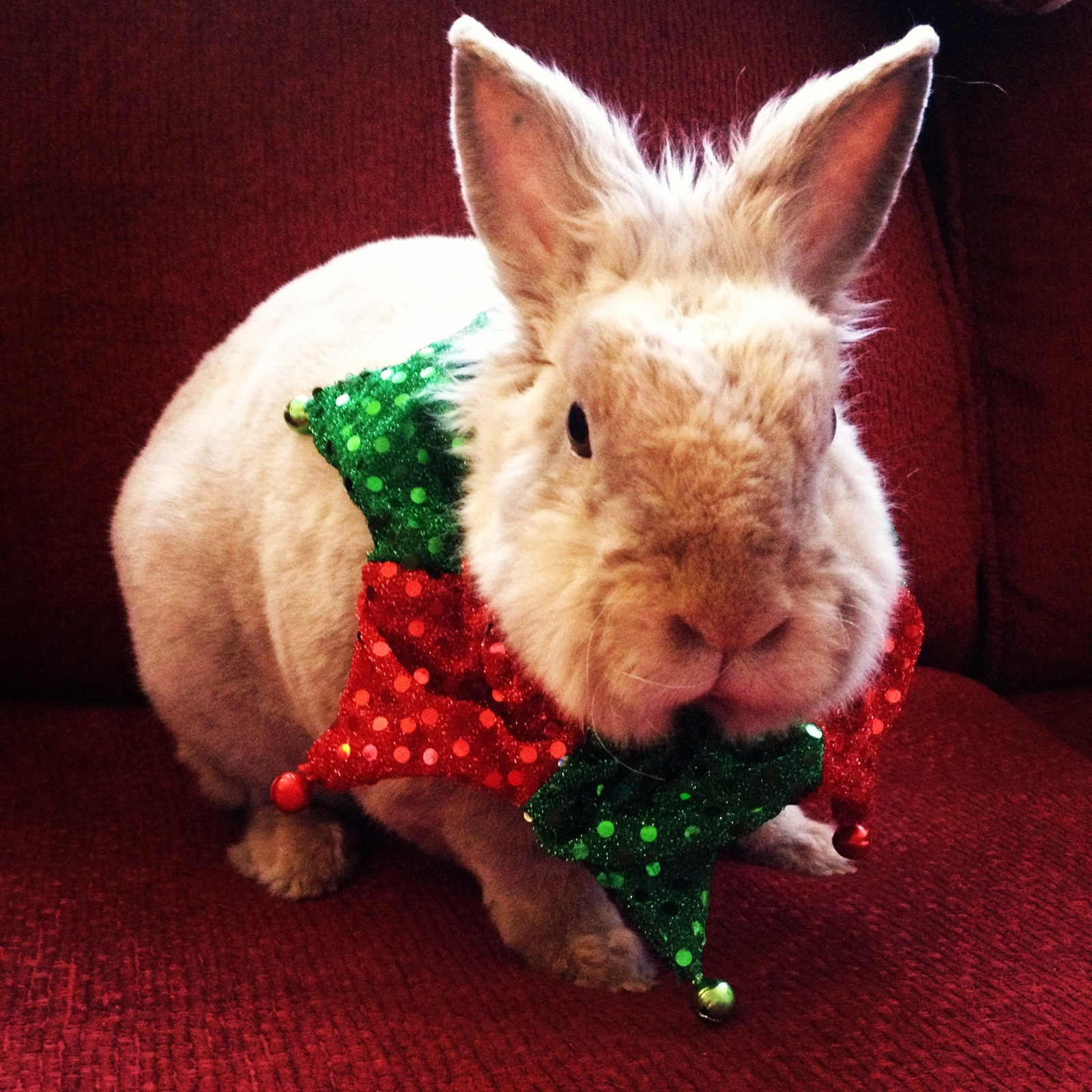 The Daily Bunny's Christmas 2013 Mega-Post 7