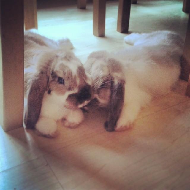 Bunnies Gently Nuzzle 1