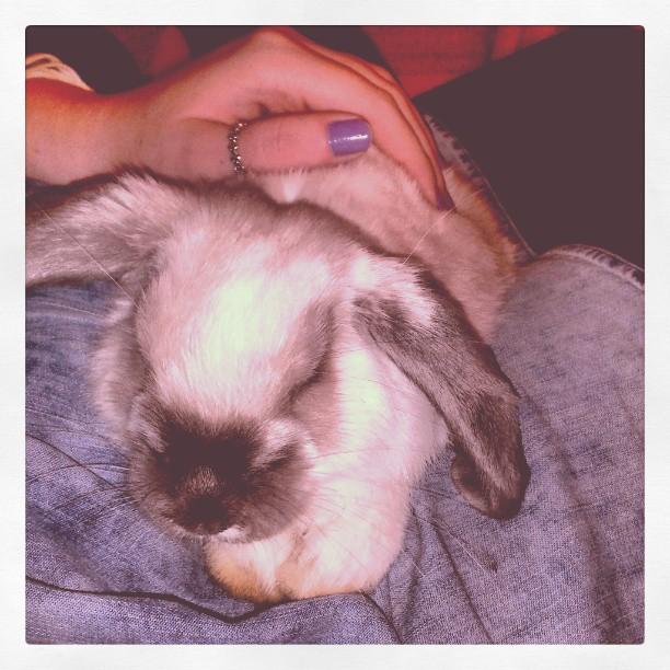 Bunnies Gently Nuzzle 2
