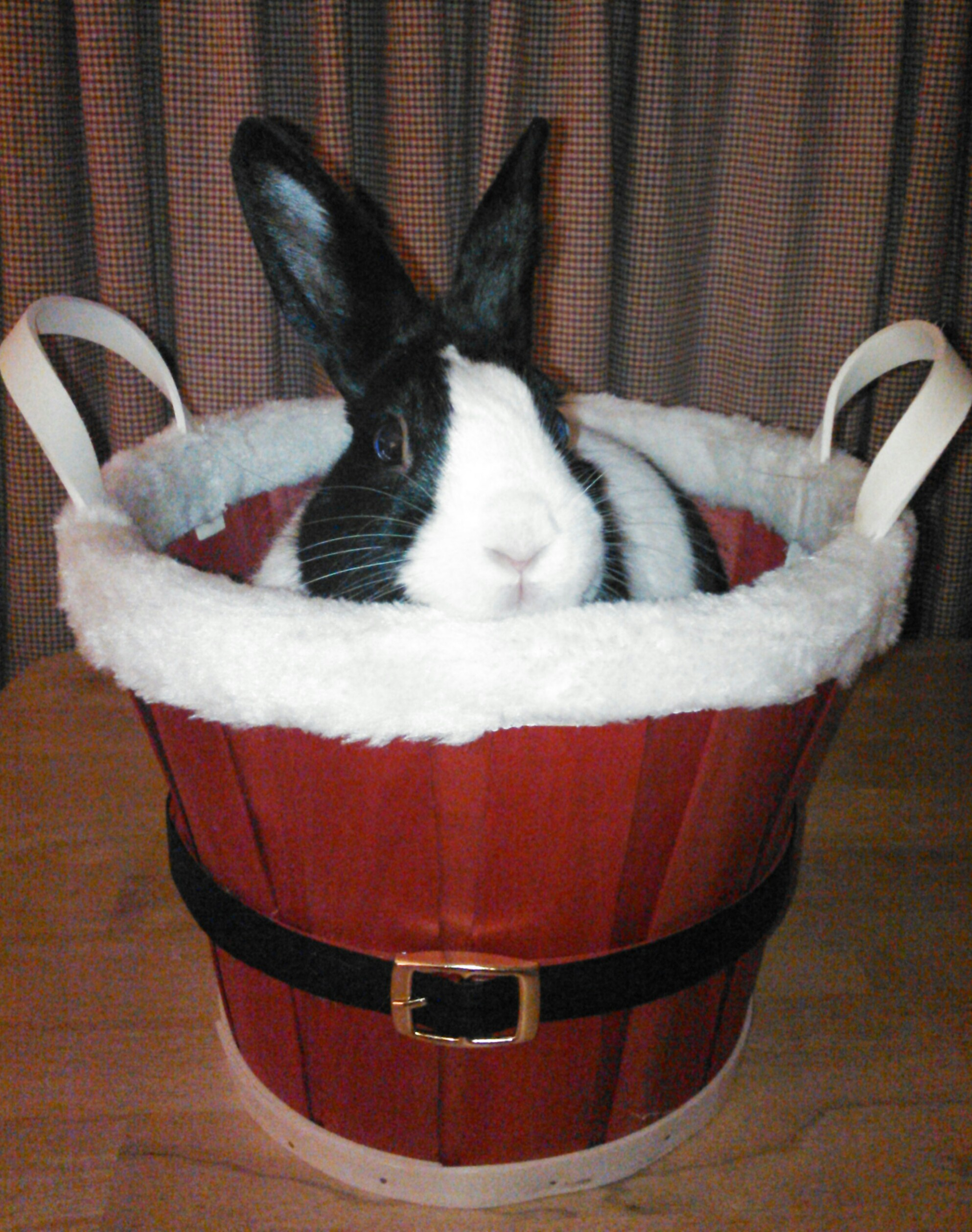 Bunny Says This Basket Is Perfect for Holiday Treats - Fill It Up!