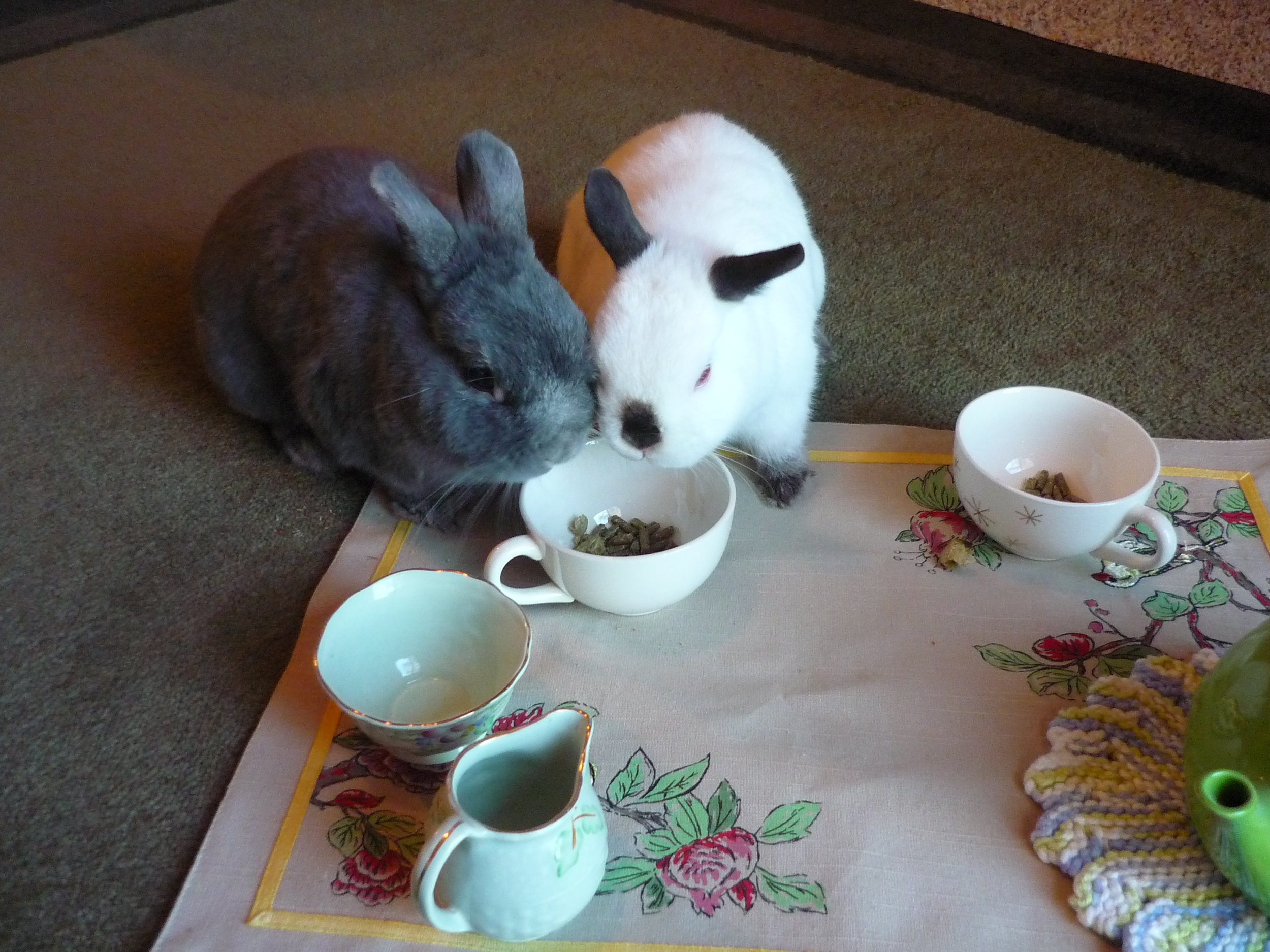 Bunnies Have a Tea Party 1