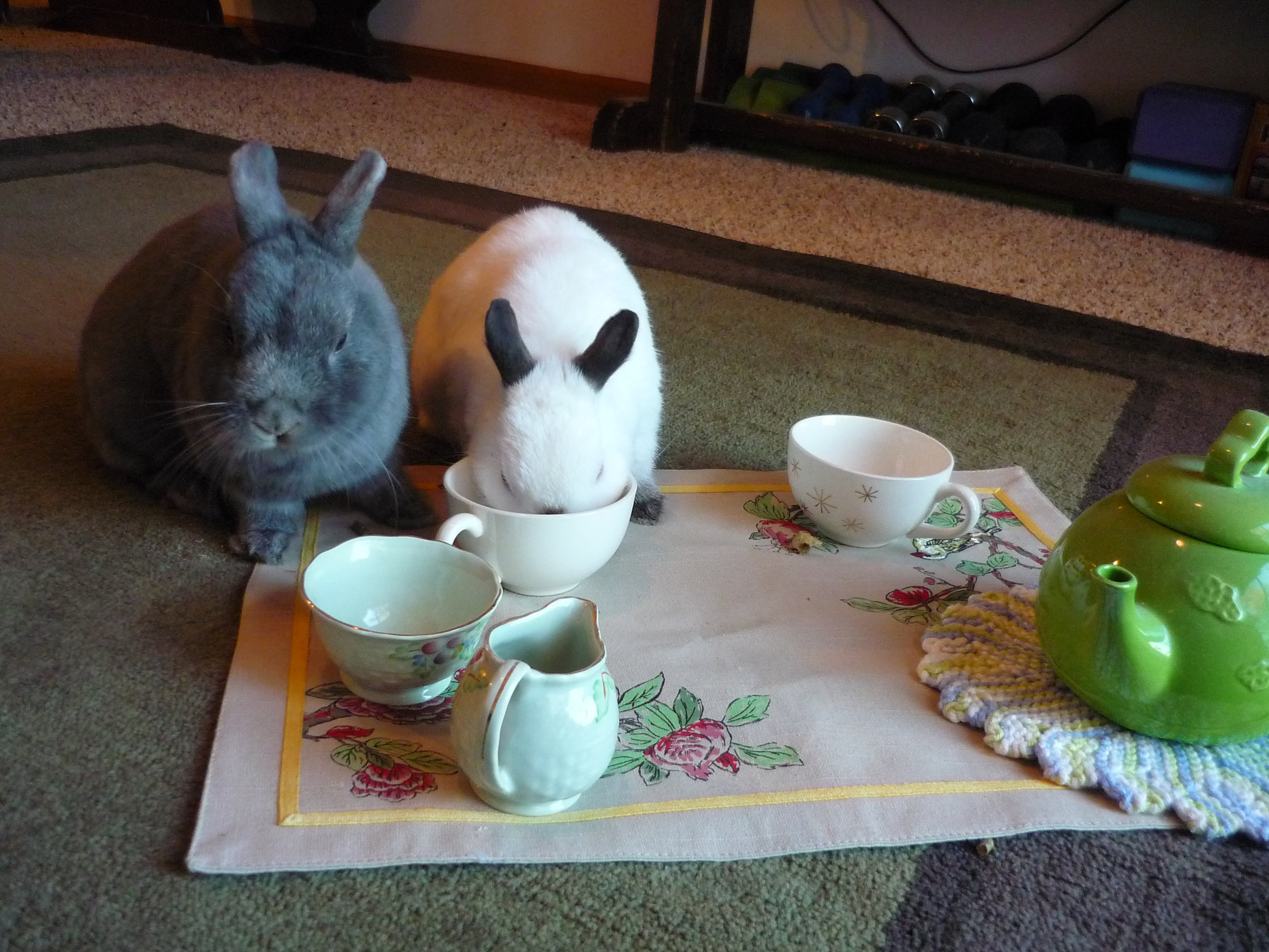 Bunnies Have a Tea Party 2