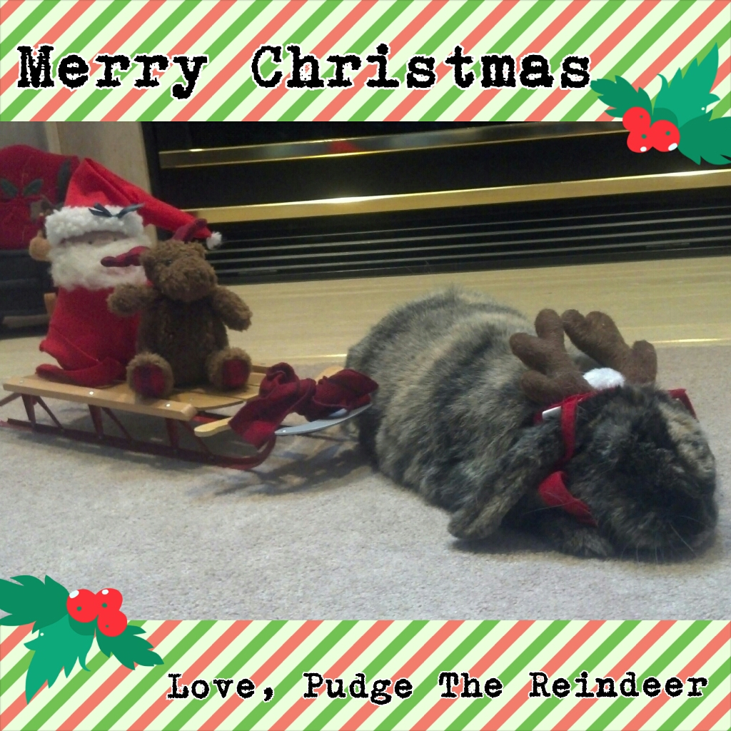 The Daily Bunny's Christmas 2013 Mega-Post 15