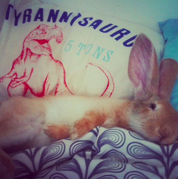 Bunny Sleeps Where Her Human Sleeps 2