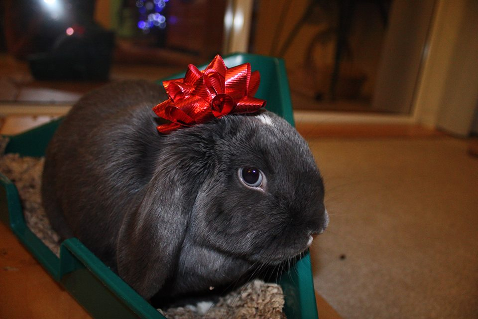 The Daily Bunny's Christmas 2013 Mega-Post 9
