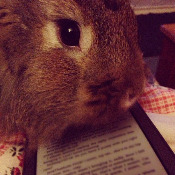 Bunny Wants You to Stop Reading and Play with Him Already 2