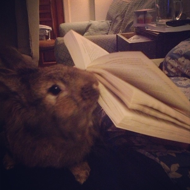 Bunny Wants You to Stop Reading and Play with Him Already 1