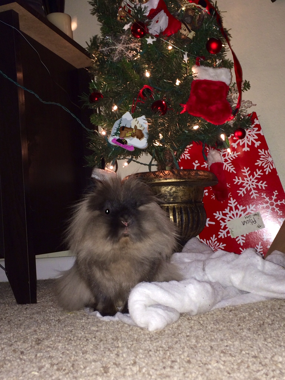 The Daily Bunny's Christmas 2013 Mega-Post 17