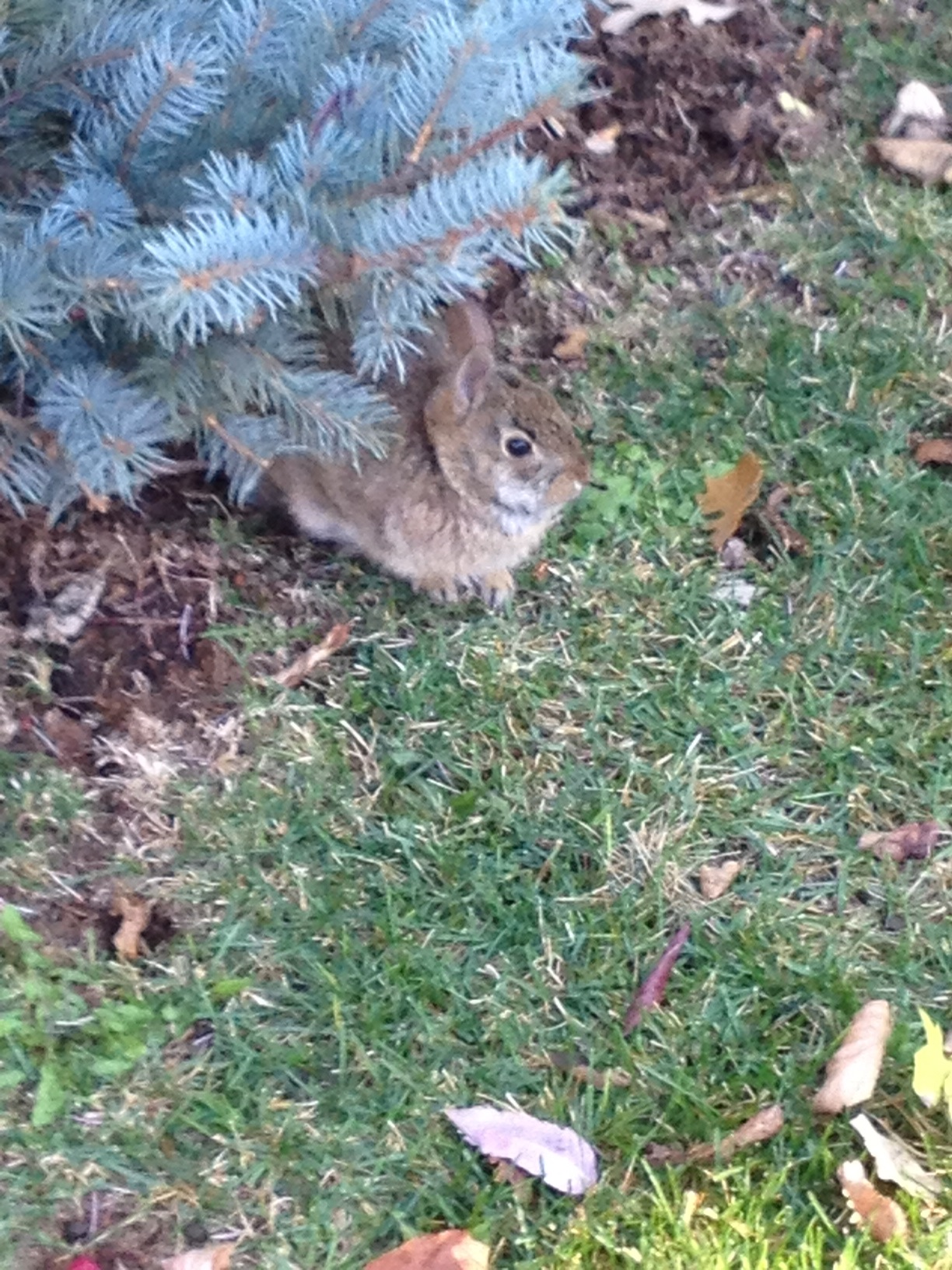 Tiny Wild Bunny Peeks Out from the Flowerbed and Nibbles on the Grass 1