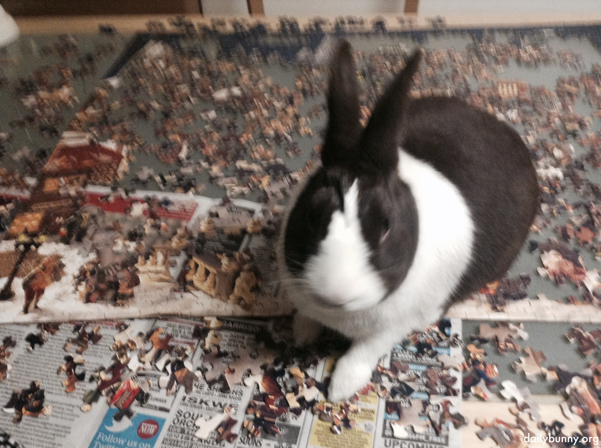Bunny Helps His Human Solve a Jigsaw Puzzle 2 w