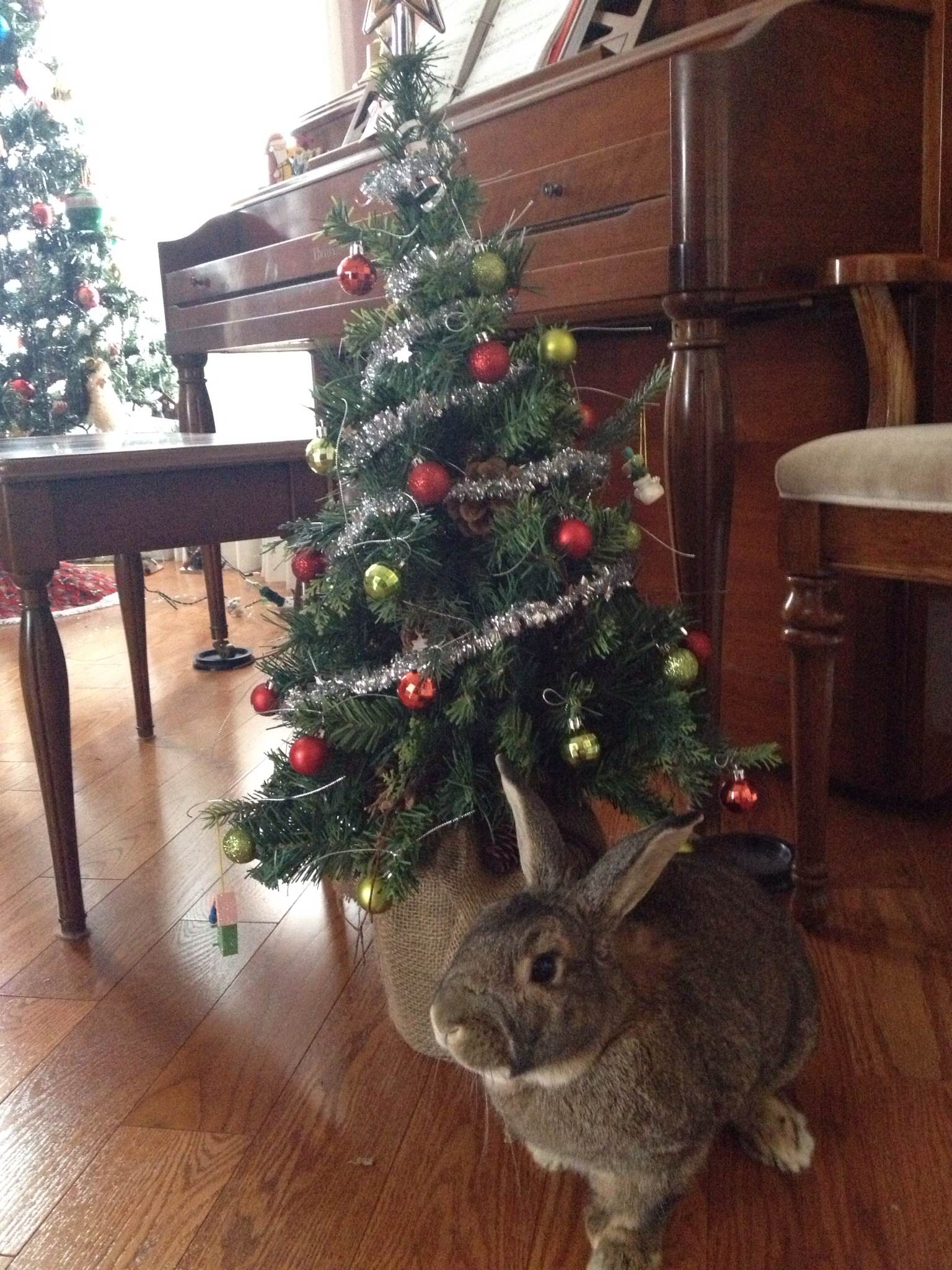 Bunny Gets His Own Bunny-Sized Christmas Tree