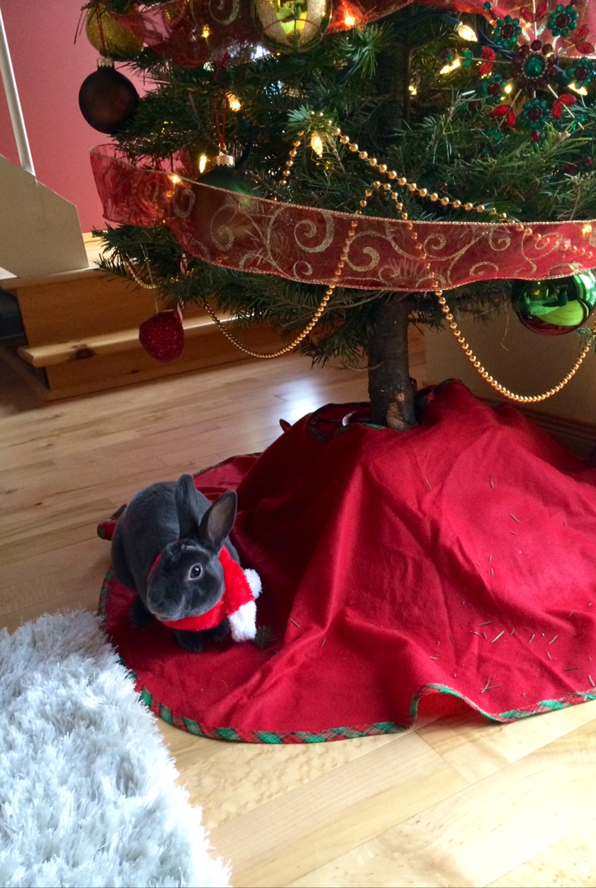 The Daily Bunny's Christmas 2013 Mega-Post 8.1