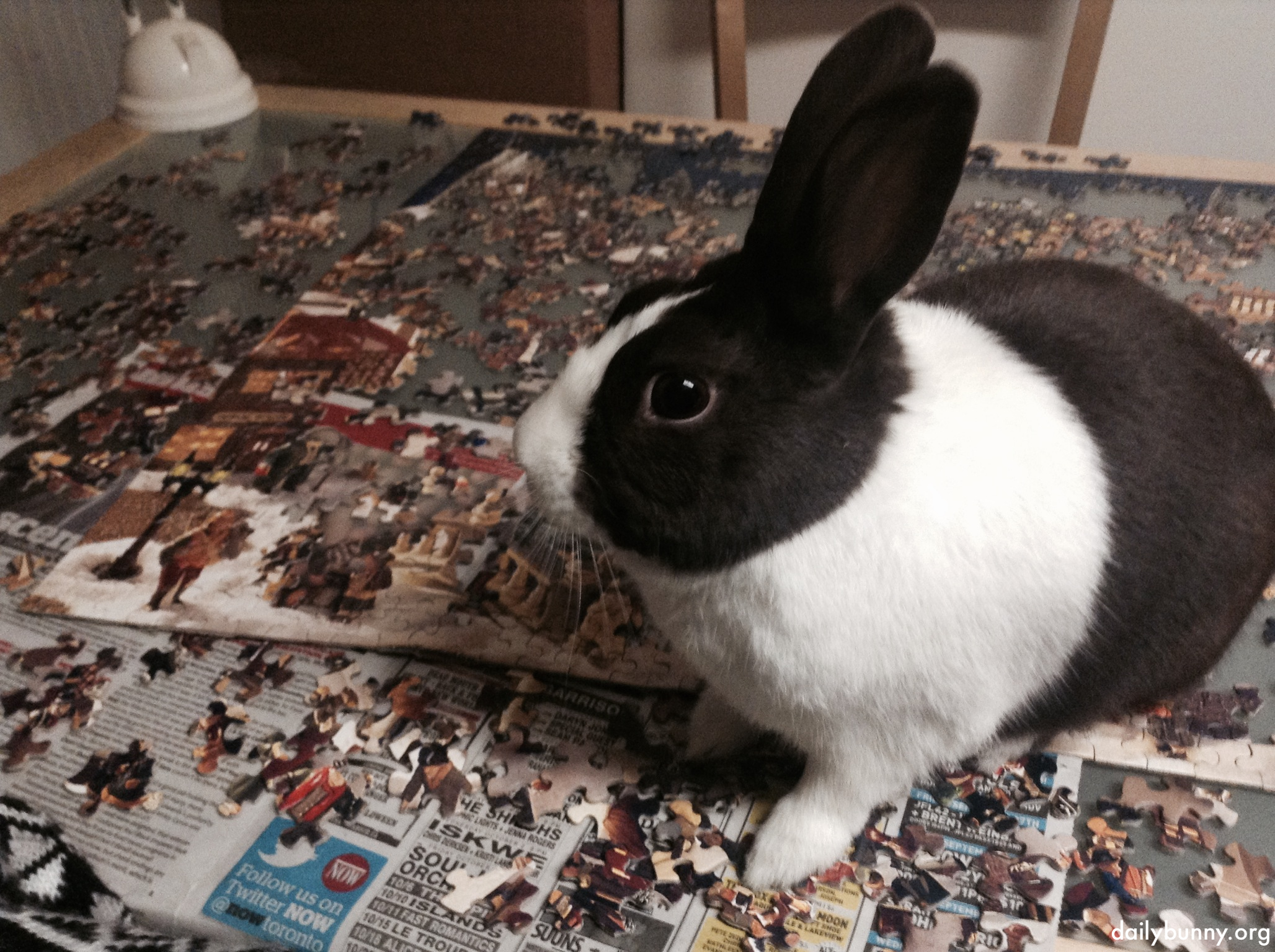 Bunny Helps His Human Solve a Jigsaw Puzzle 1 w