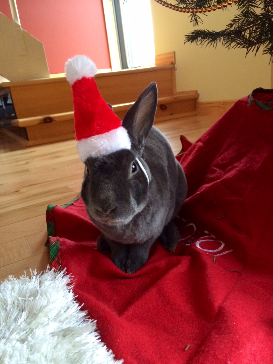 The Daily Bunny's Christmas 2013 Mega-Post 8.2