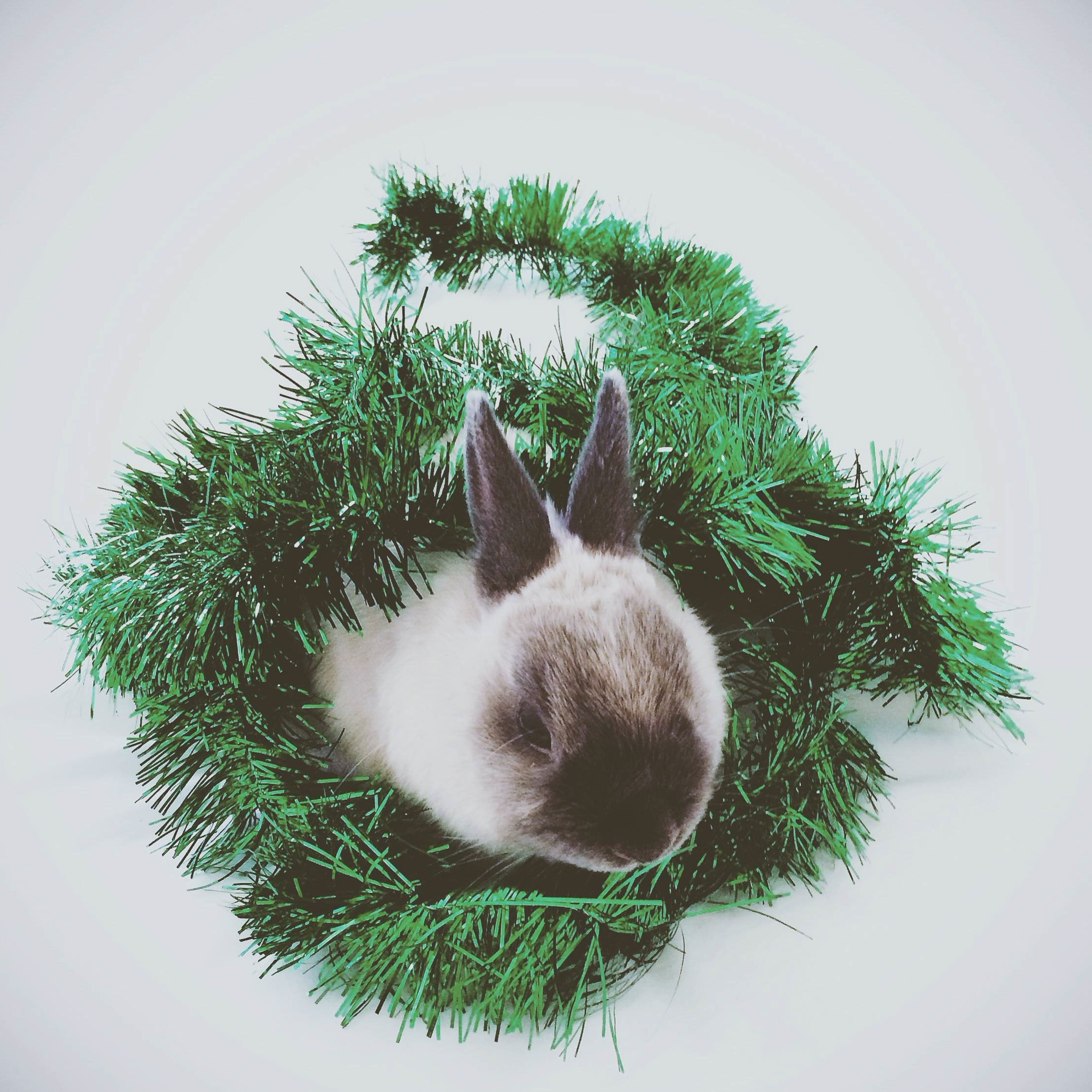 Bunny Is at the Center of a Tinsel Wreath