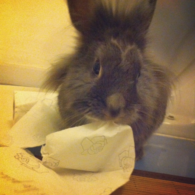 Bunny Tries to Get at the Very Last of Her Human's Juice 5