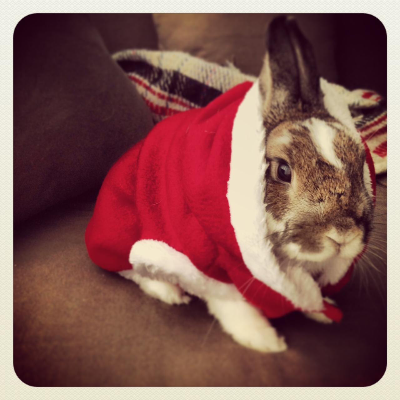 Bunny Plays Santa