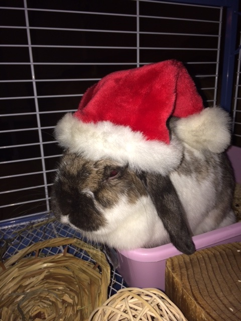 The Daily Bunny's Christmas 2013 Mega-Post 14