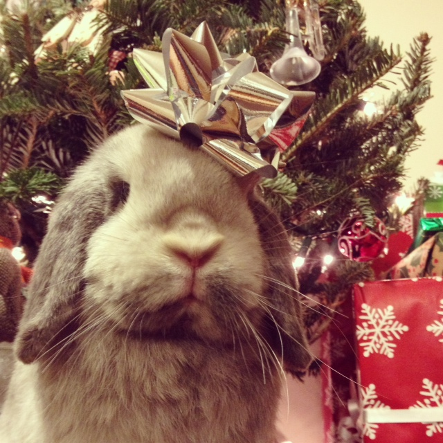 The Daily Bunny's Christmas 2013 Mega-Post 23