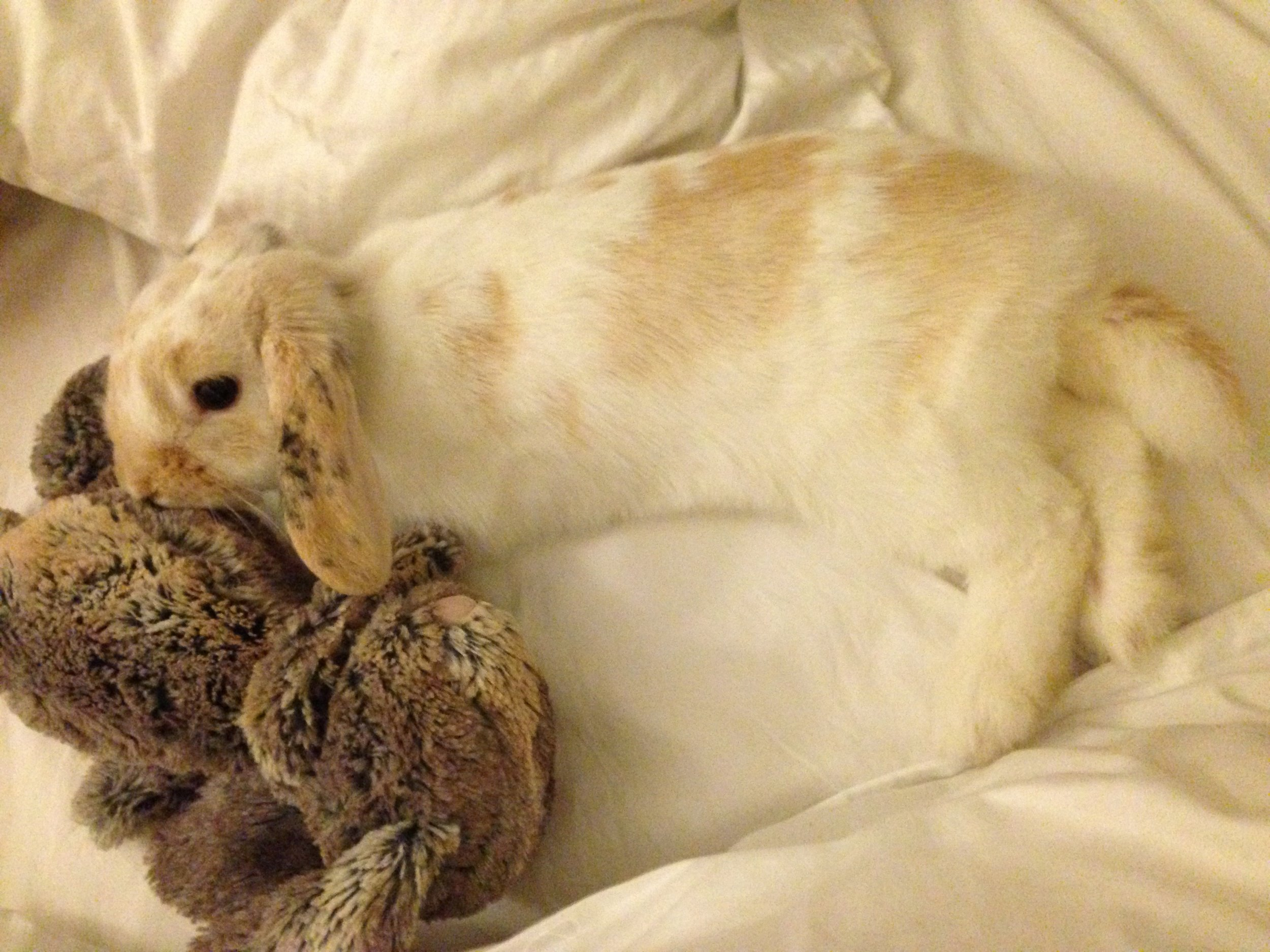 Bunny Hangs Out with Some Plush Friends 3