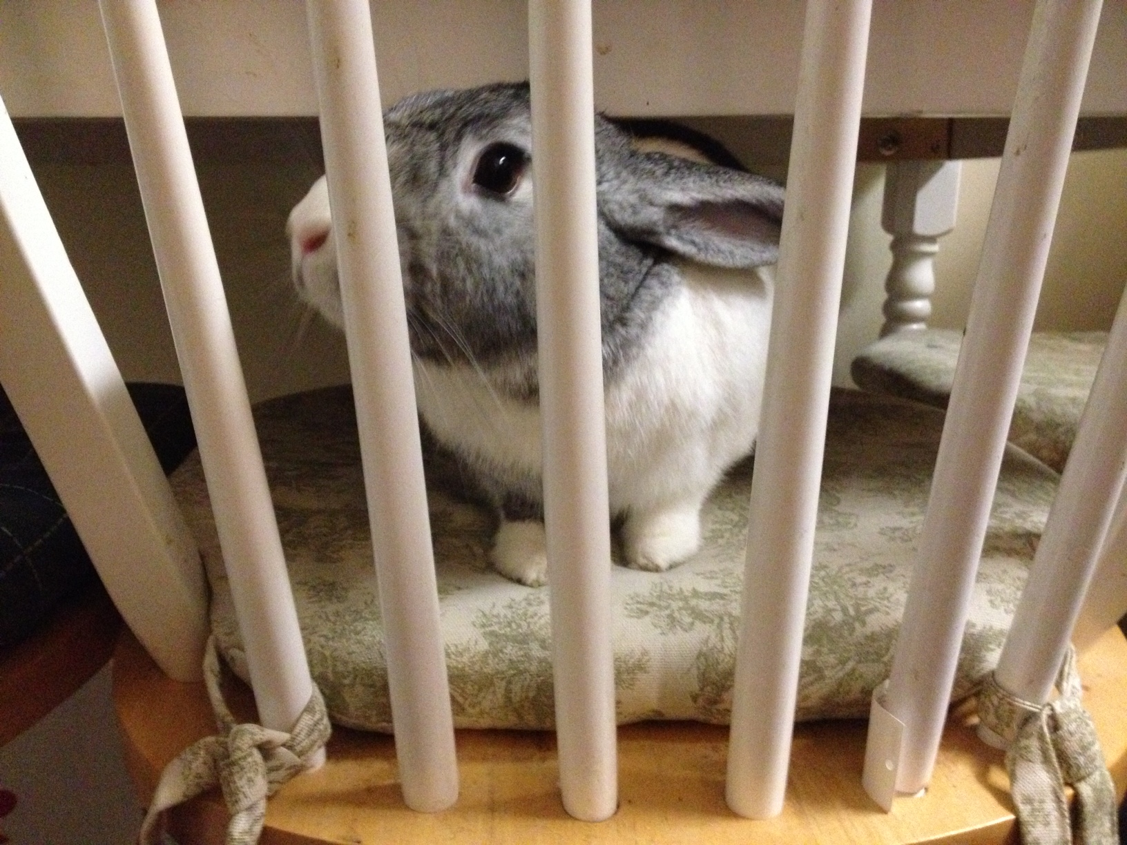 Jailed Bunny Is Sentenced to a Lifetime of Cuddles and Treats