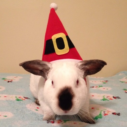 The Daily Bunny's Christmas 2013 Mega-Post 16