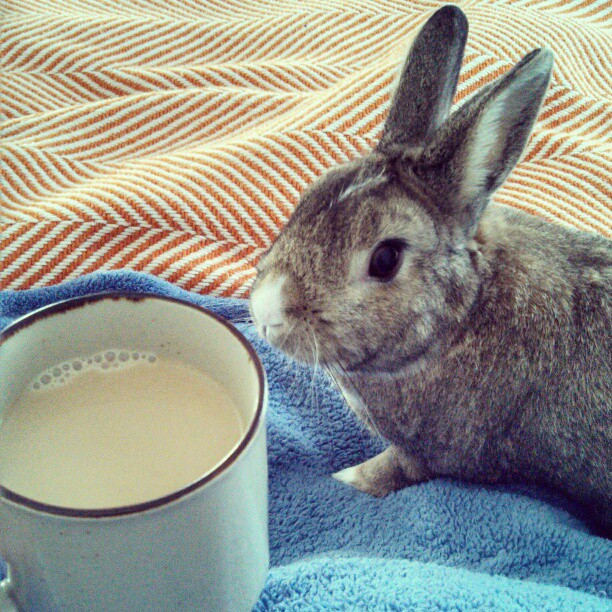Bunny and His Human Have a Morning Cuddles-and-Coffee Session