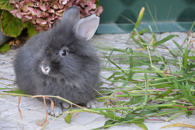 Bunny Poses with Flower Stems Instead of Eating Them