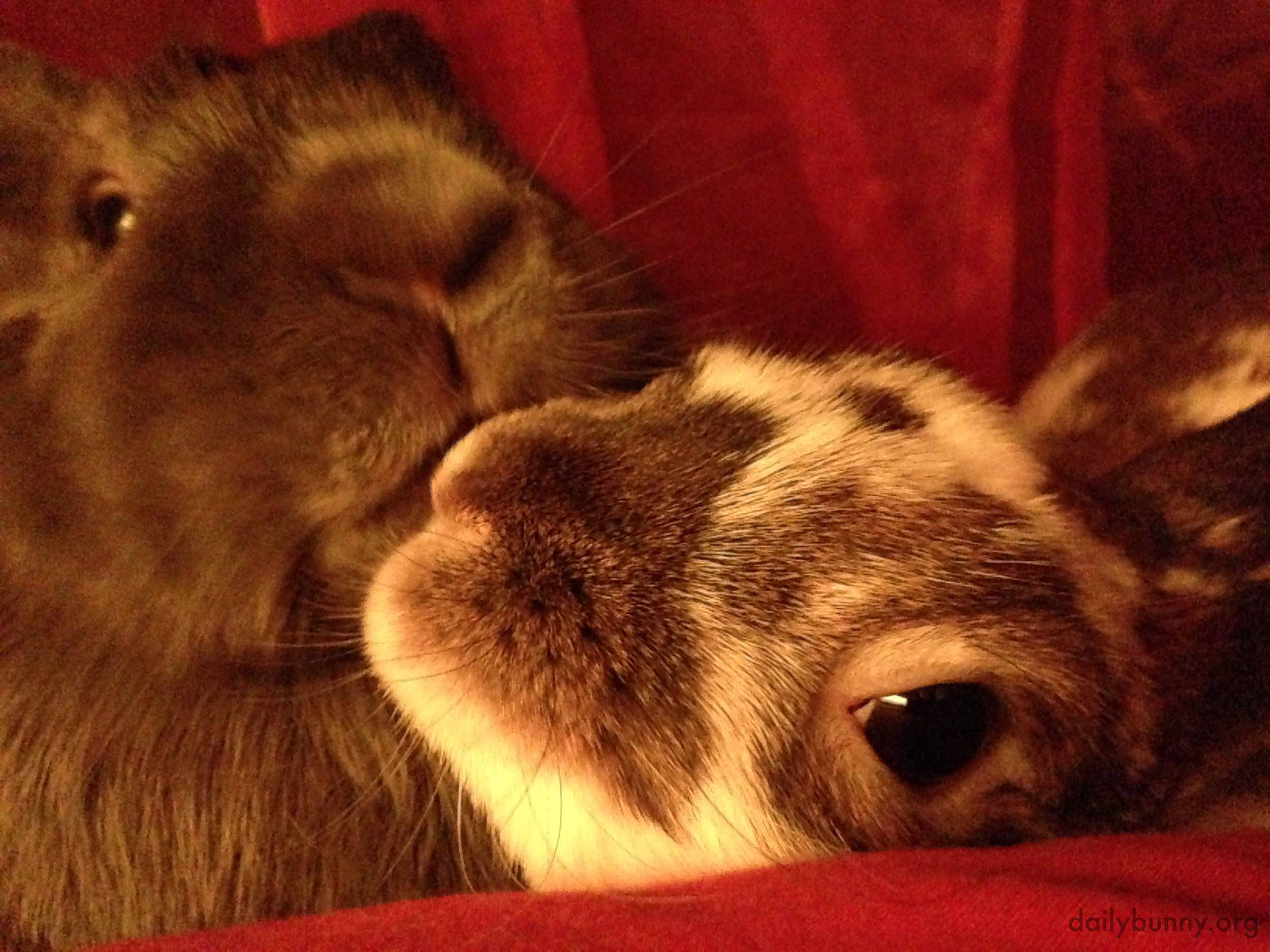 Bunnies Have a Quick Kiss for the Camera