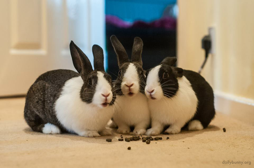 Bunnies Look Like They've Been Caught During a Conspiratorial Meal