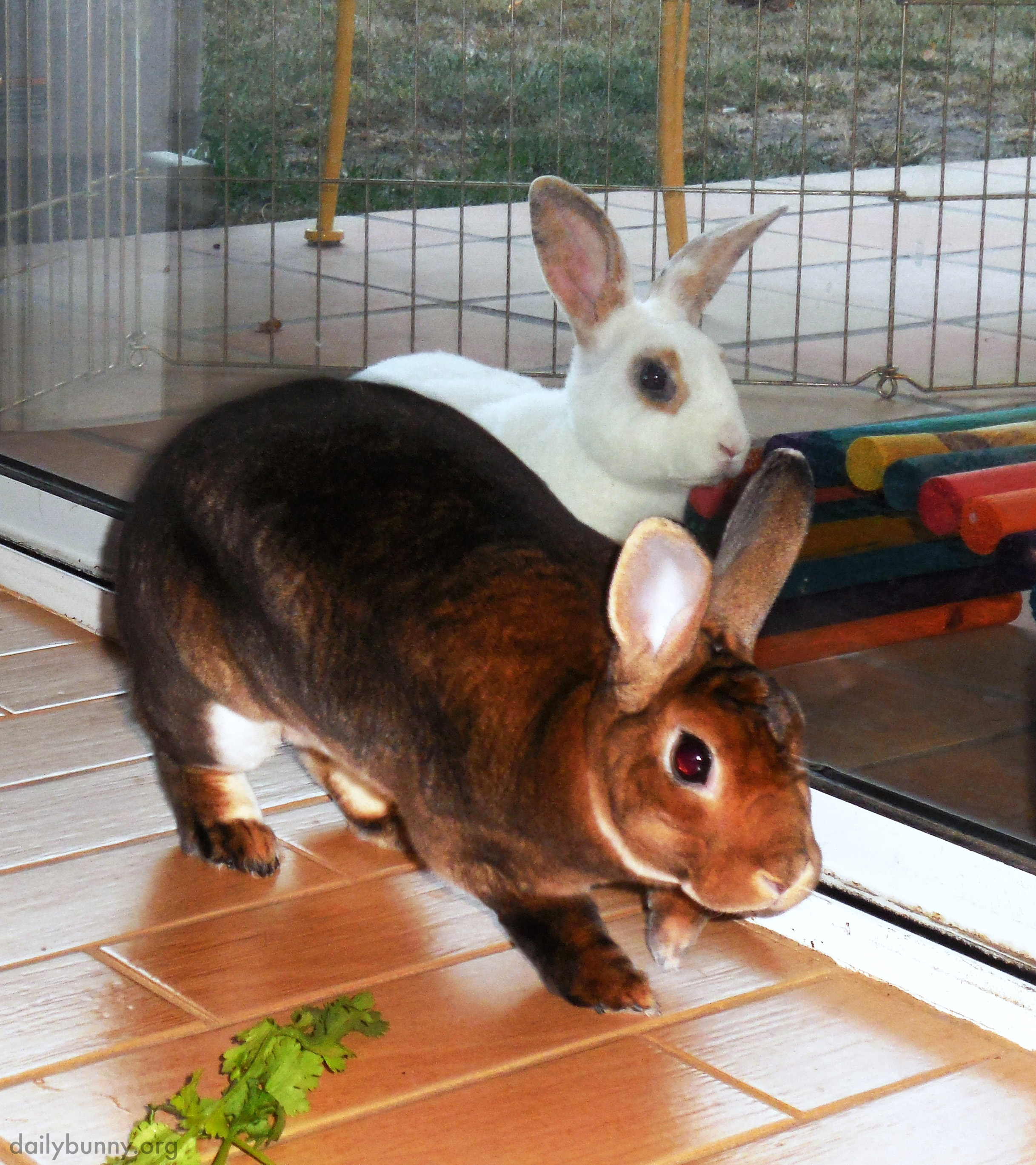 Bunny Burglars Quietly Creep into the Kitchen for a Vegetable Robbery