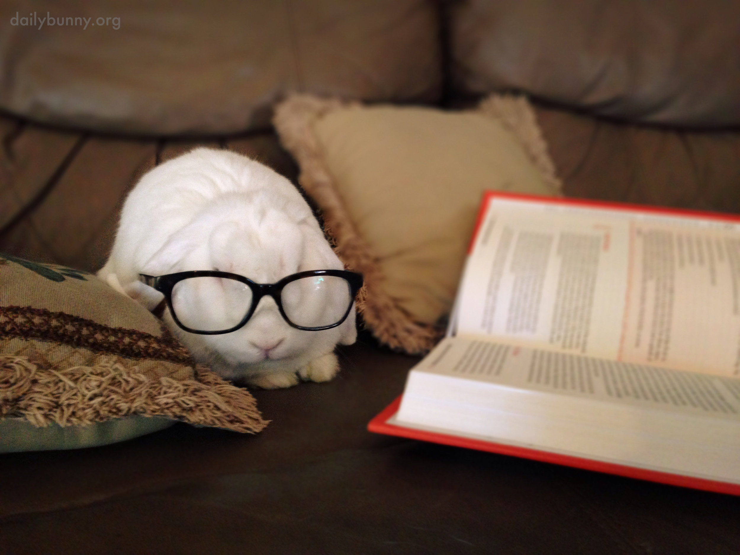 Bunny Is Clearly an Intellectual