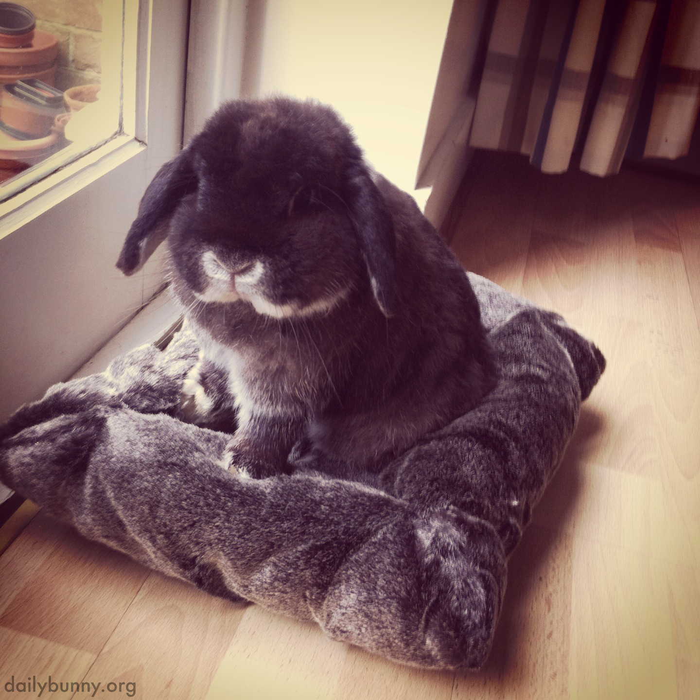 Bunny Likes to Match His Bedding with His Fur
