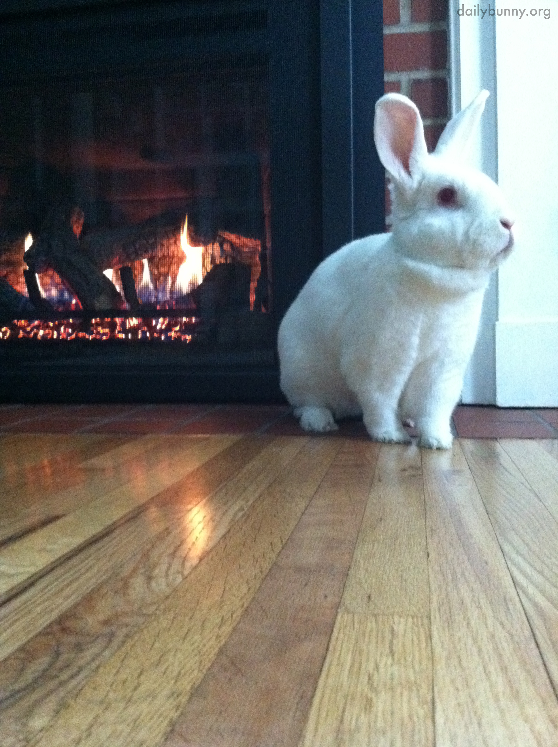 Bunny Warms His Bum by the Fire