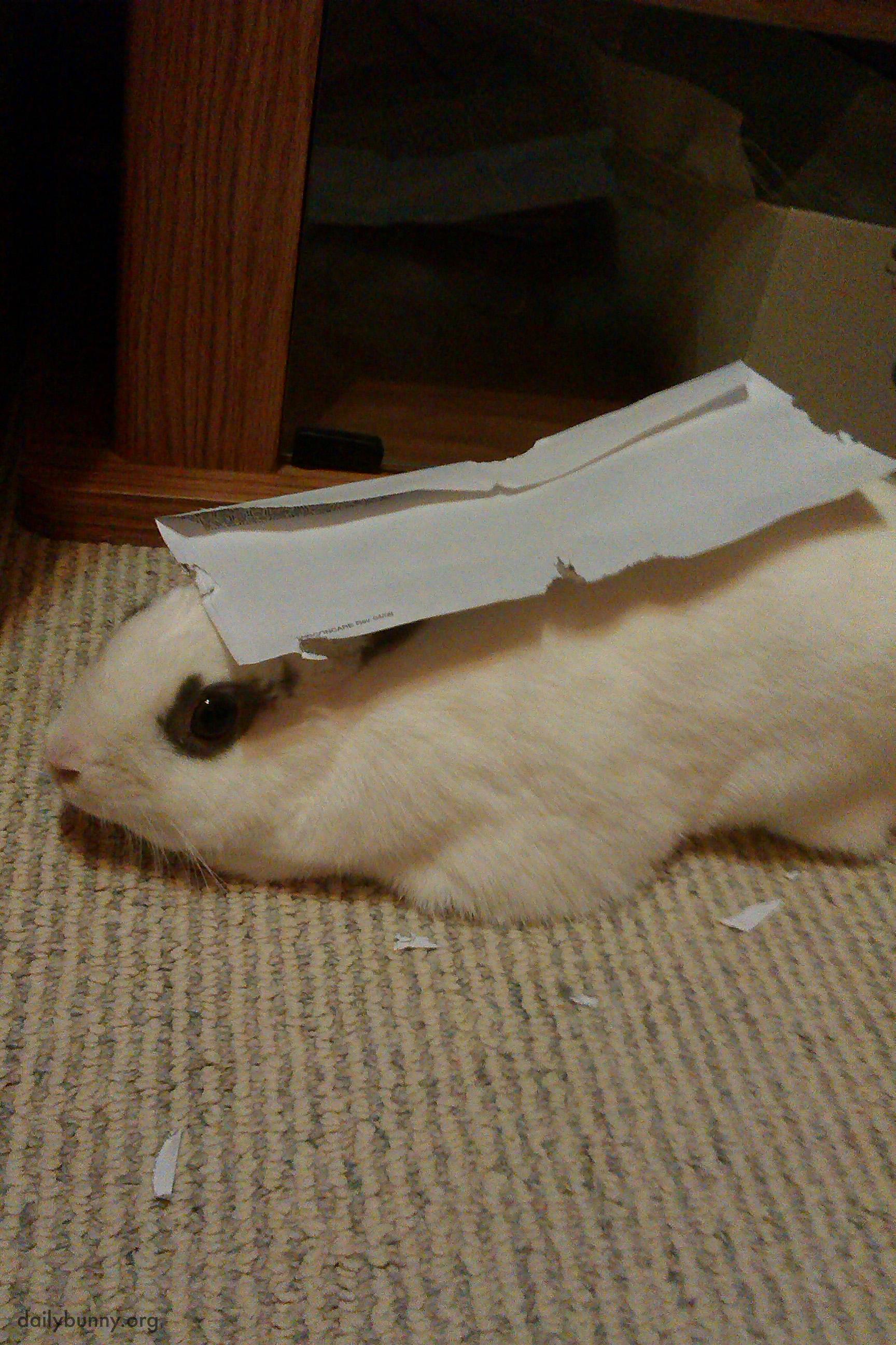 Bunny vs. Envelope, Envelope Prevails