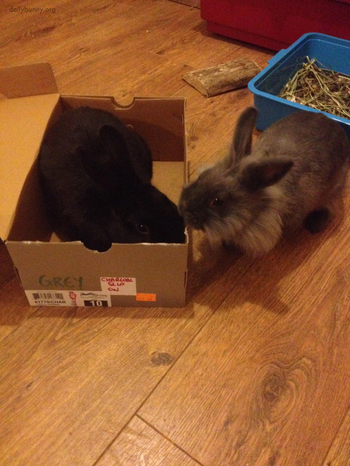 Having Been Denied Entry to the Shoebox, Bunny Gives Her Friend the Cold Shoulder 1