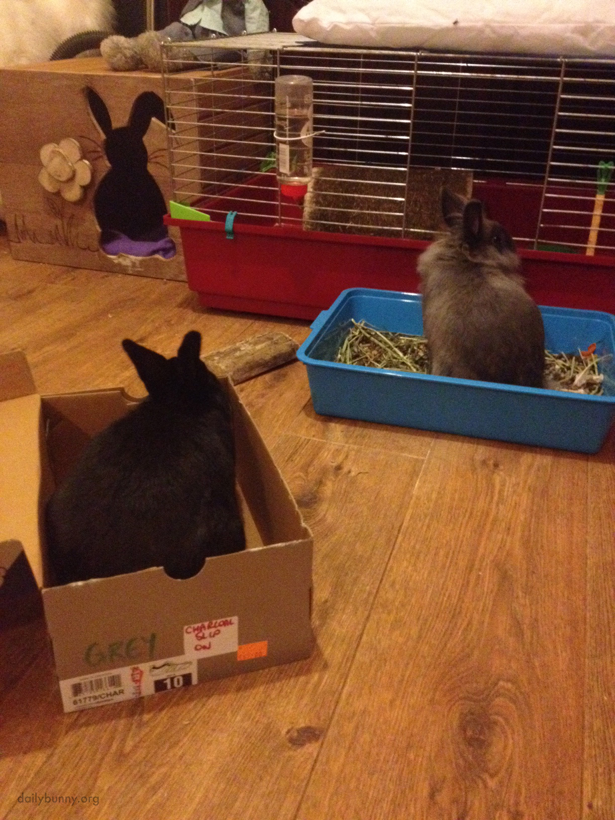 Having Been Denied Entry to the Shoebox, Bunny Gives Her Friend the Cold Shoulder 2
