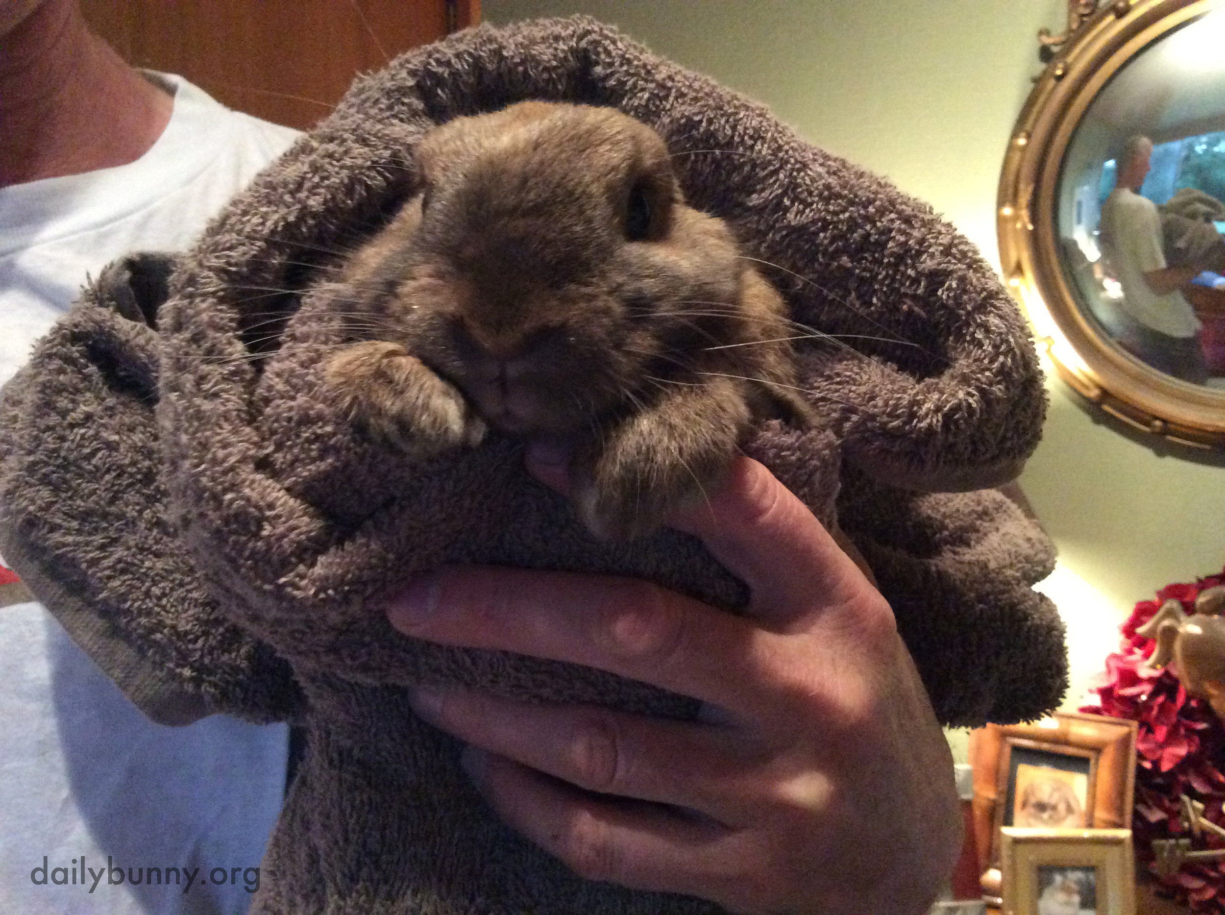 Bunny Has Been Burrito-ed